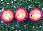 muffins vanille & fruits rouges-top