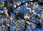 pollen-top