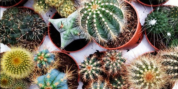 Dans la vie, il y a des cactus…